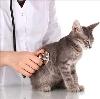Ветеринарные клиники в Арамиле